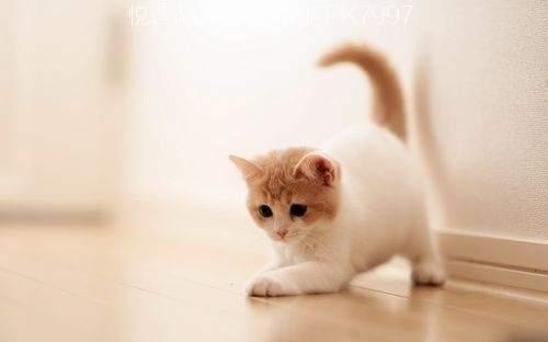 可爱猫咪壁纸图片 (1)