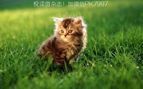 可爱猫咪壁纸图片 (11)