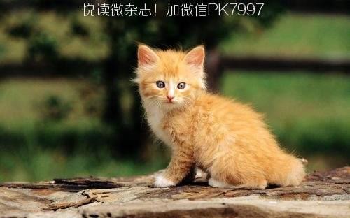 可爱猫咪壁纸图片 (12)