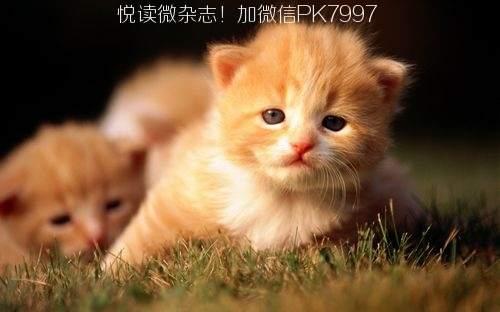 可爱猫咪壁纸图片 (13)