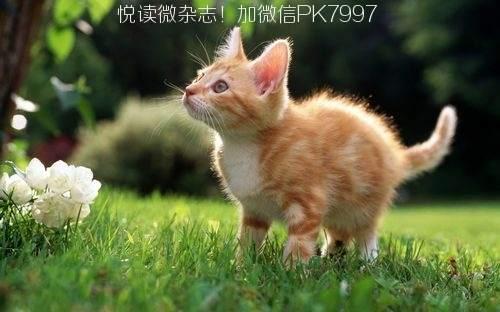 可爱猫咪壁纸图片 (14)