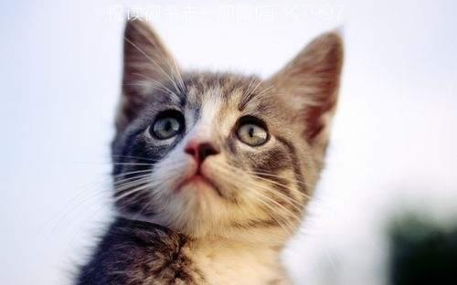 可爱猫咪壁纸图片 (15)