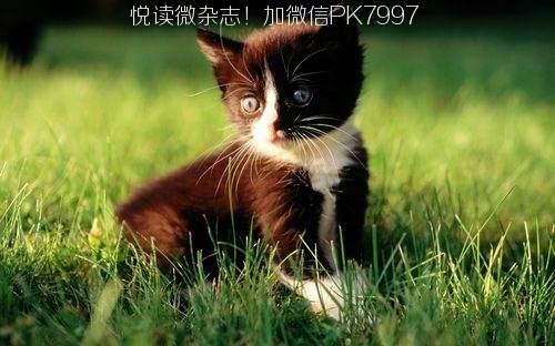 可爱猫咪壁纸图片 (16)