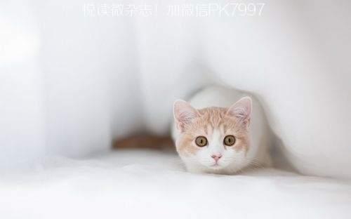 可爱猫咪壁纸图片 (2)