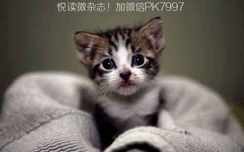 可爱猫咪壁纸图片 (3)