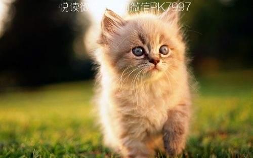 可爱猫咪壁纸图片 (5)