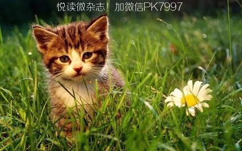 可爱猫咪壁纸图片 (6)