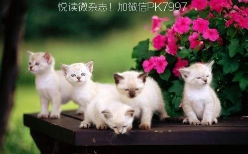 可爱猫咪壁纸图片 (7)