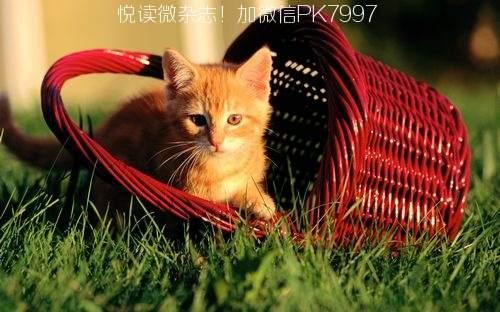 可爱猫咪壁纸图片 (8)