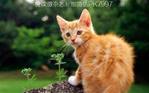可爱猫咪壁纸图片 (9)