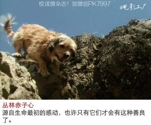 关于狗狗的9部感人电影推荐 (1)