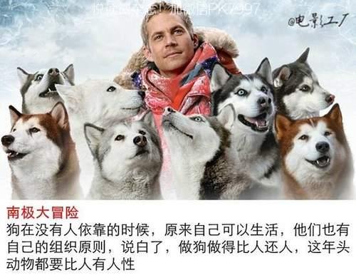 关于狗狗的9部感人电影推荐 (2)