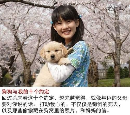 关于狗狗的9部感人电影推荐 (4)