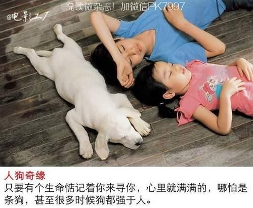 关于狗狗的9部感人电影推荐 (5)