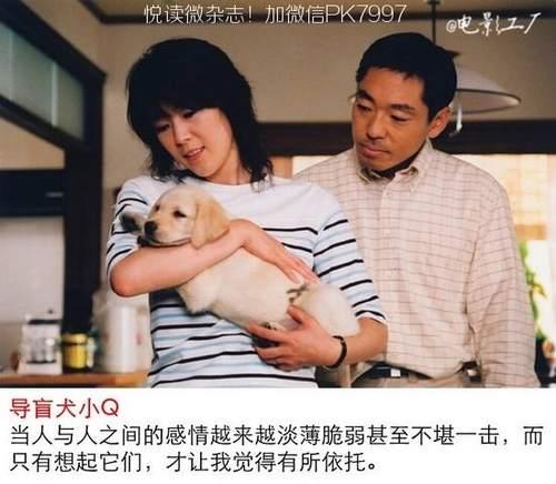 关于狗狗的9部感人电影推荐 (6)
