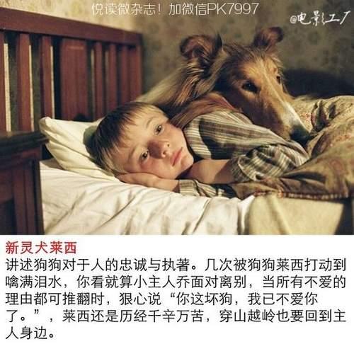 关于狗狗的9部感人电影推荐 (7)