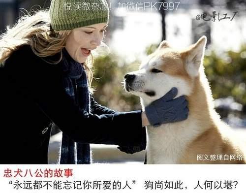 关于狗狗的9部感人电影推荐 (9)