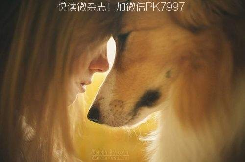 关于狗狗的10个感人小故事