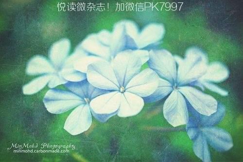 心无澜,碧海晴天 (1)