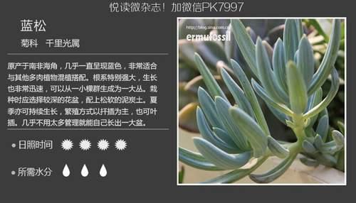 100种常见多肉植物图鉴