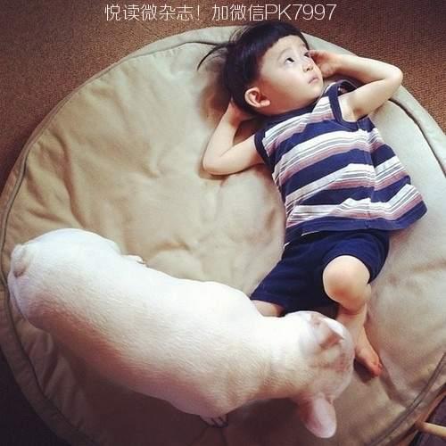 AYASAKAI家的小孩与斗牛狗
